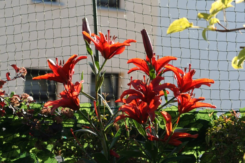 Meine Blumen!