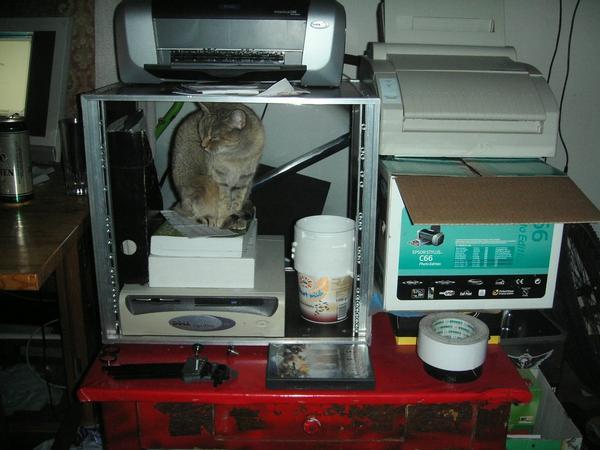 Catcomputing